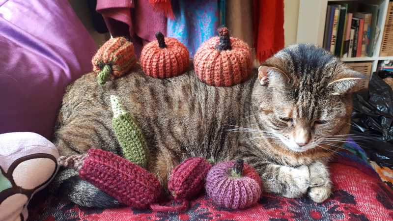our cat, Tiggy, surrounded by crocheted squashes and gourds